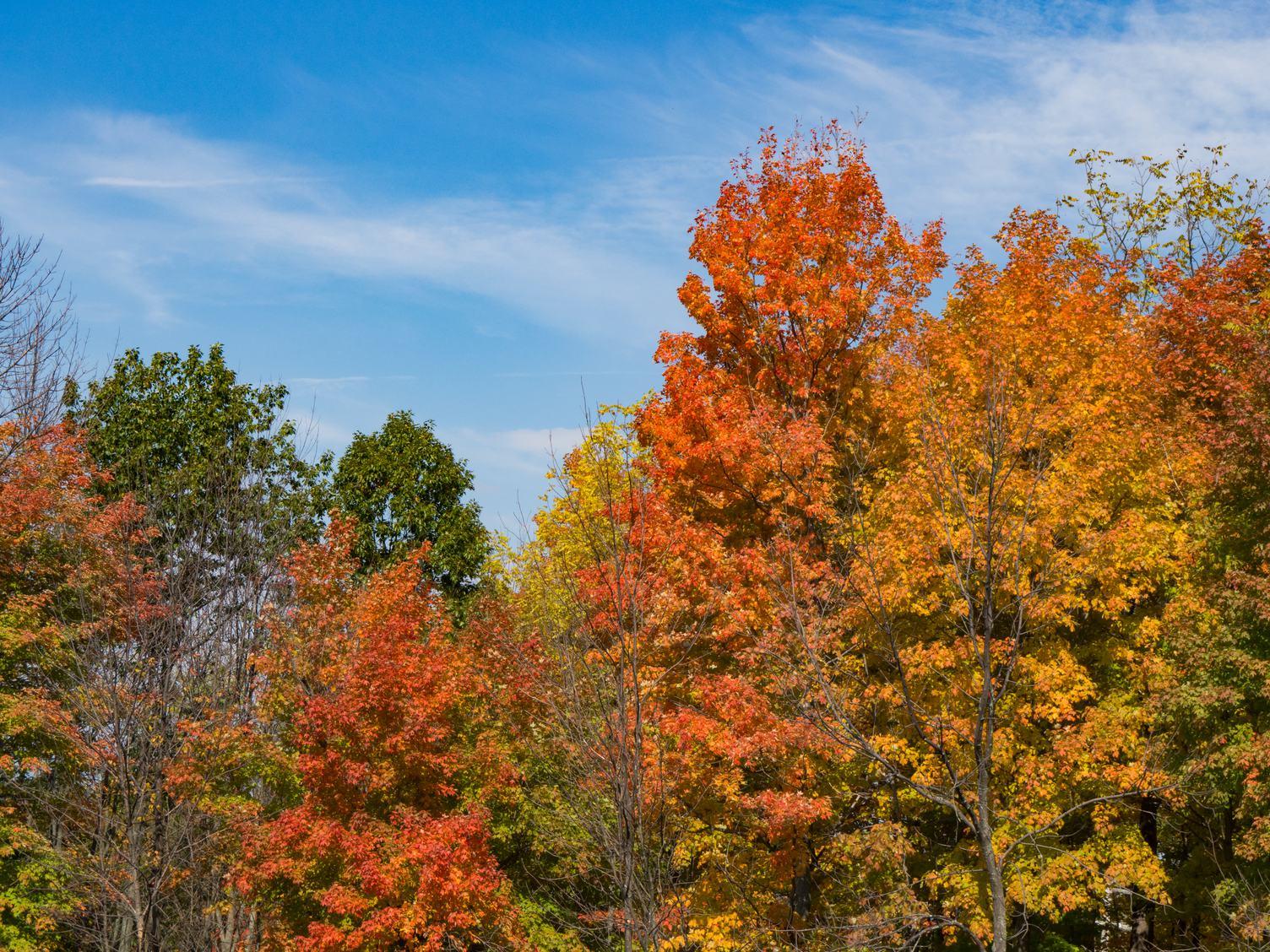 Autumn Trees against Blue Sky