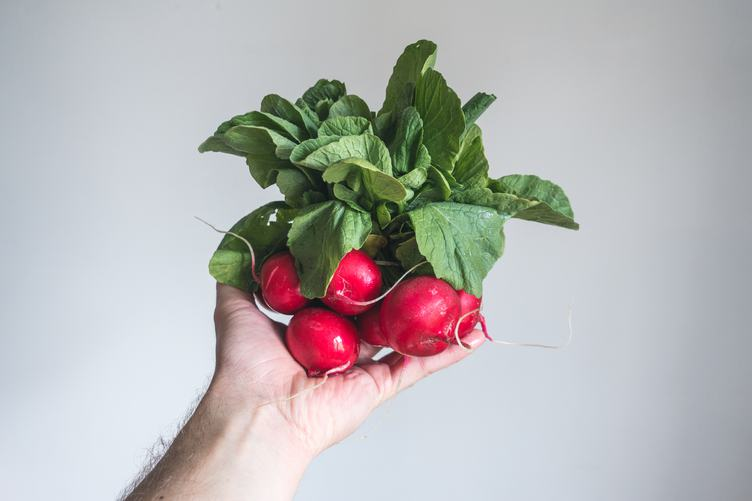 Bunch of Radishes in Male Hand