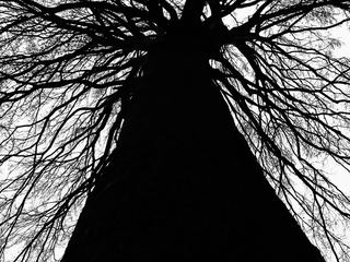 Tree Silhouette, Branches and Tree Trunk
