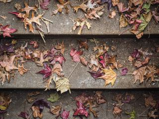 Stairs full of Autumn Leaves Maple and Oak