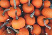 A Lot of Pumpkin at Outdoor Market
