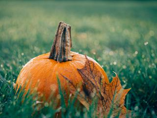 Pumpkin on Wet Grass