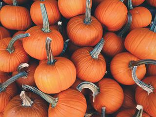 A Lot of Pumpkin at Outdoor Market