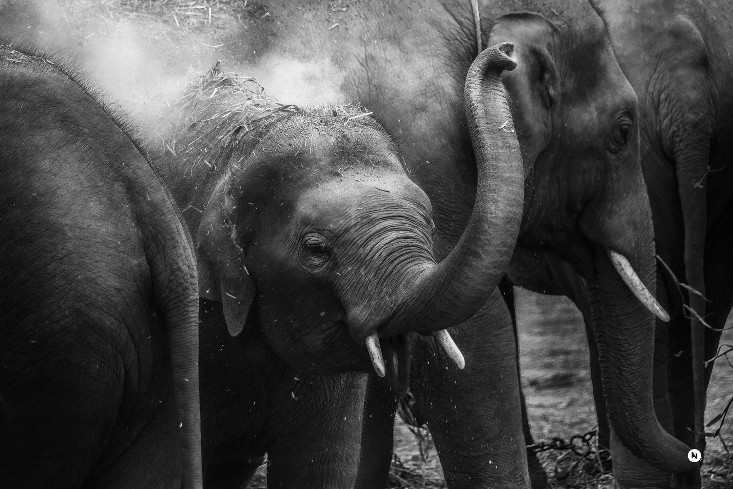 Elephant Family Closeup