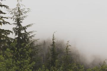 Hazy Evergreen Forest