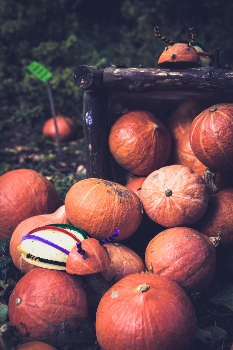 Funny Bugs Made of Pumpkins