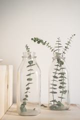 Plants in a Bottle Interior Decorations