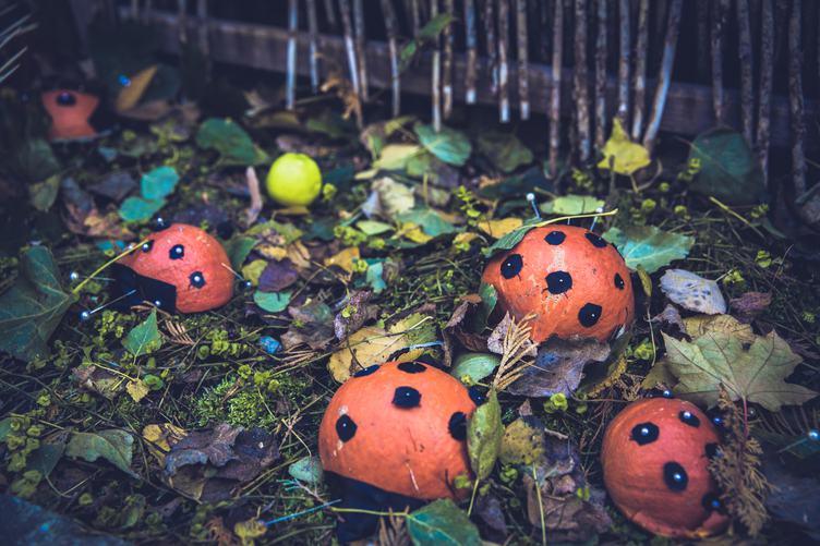 Pumpkin Ladybugs Family