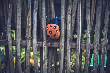 Pumpkin Ladybug Sitting on Fence with Sticks