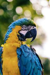 Portrait of Macaw Parrot