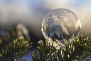 Frozen Bubble at Sunset on a Twig
