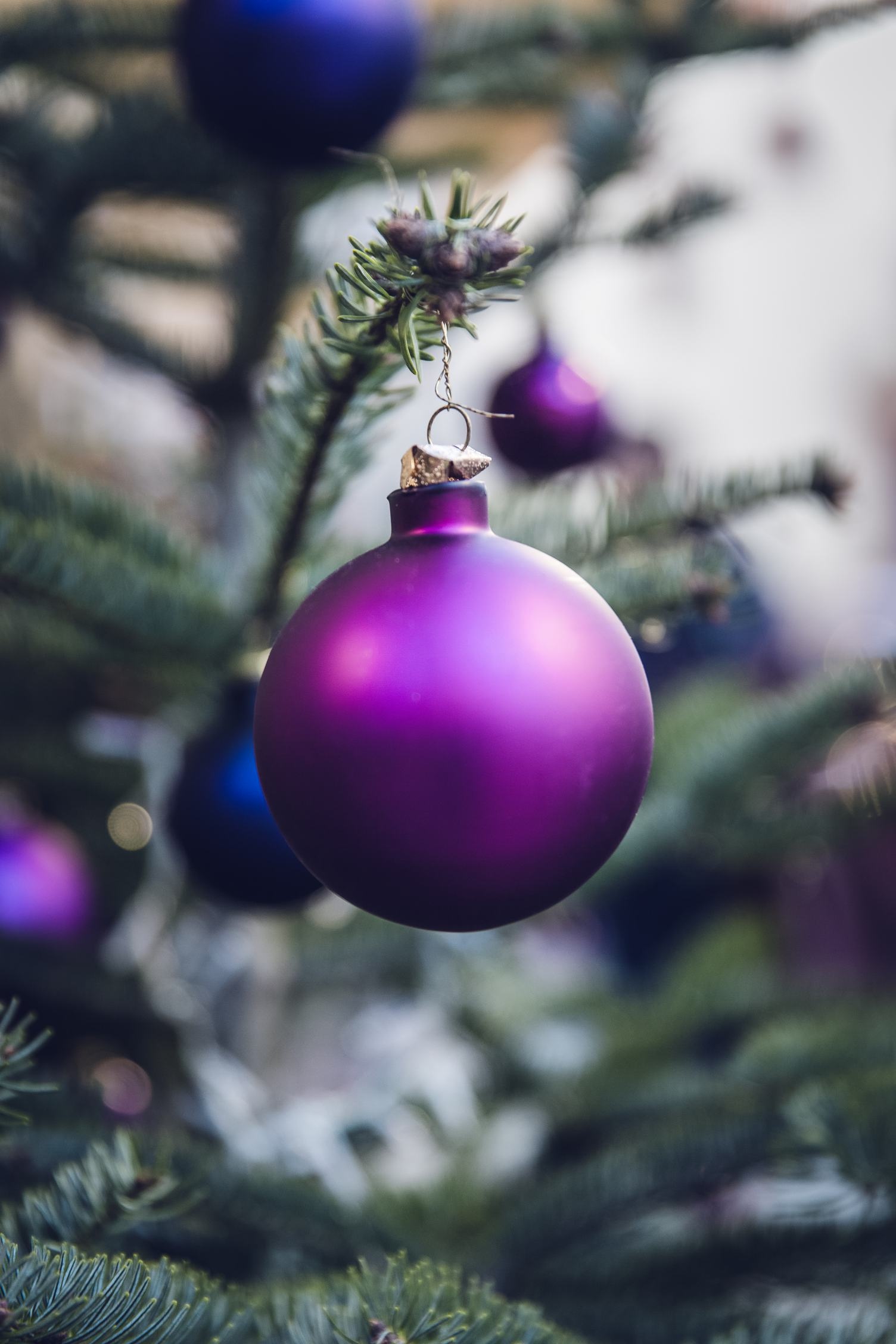 Purple Christmas Balls Hanging on a Christmas Tree
