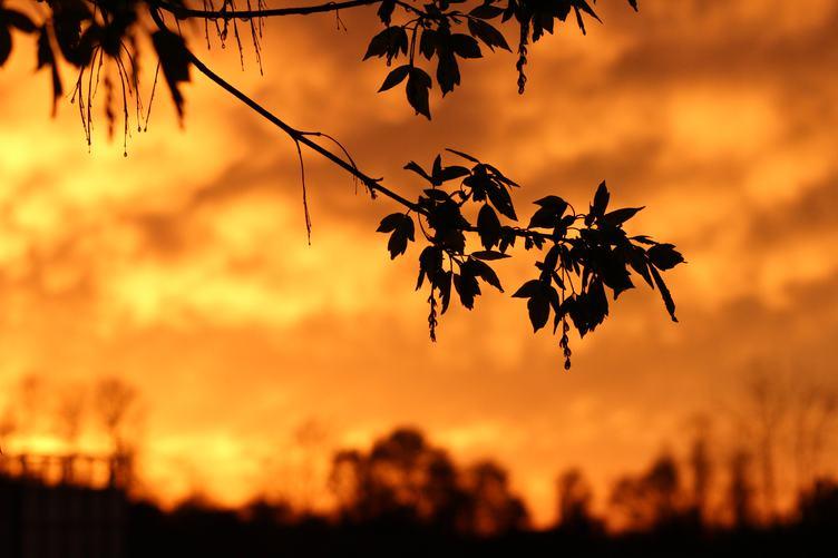 Twig Silhouette against Orange Sky