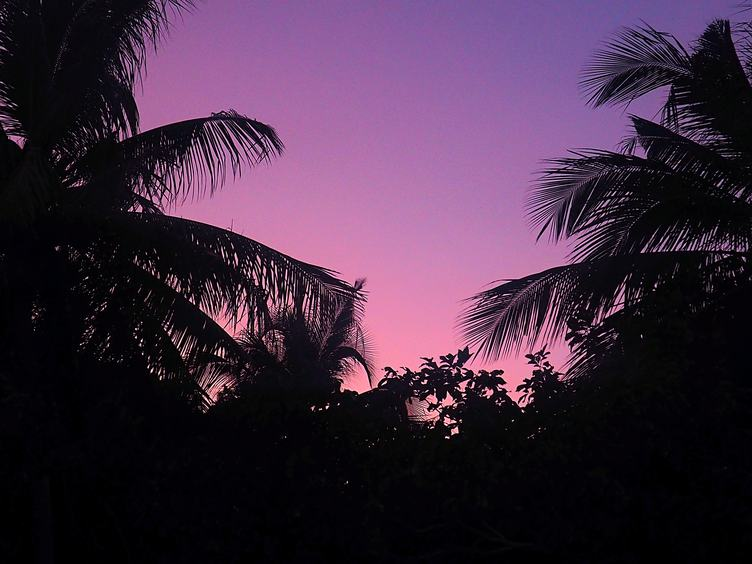 Palm Trees Purple Sunset Background