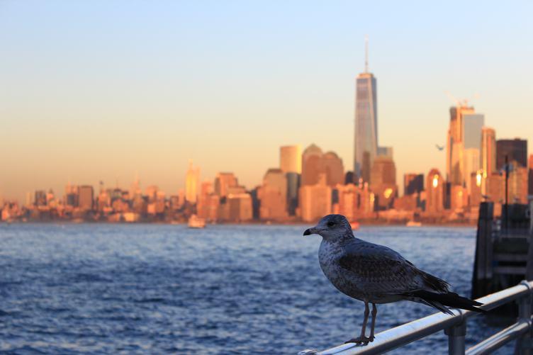 Seagull against Manhattan Skyline, New York