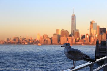 Seagull against Manhattan Skyline, New York