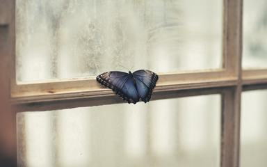 Window with a Blue Butterfly