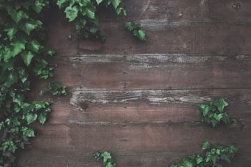 Ivy Green Leaf Frame on Plank Wood Wall