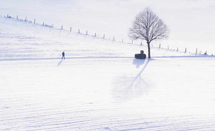 Winter Field Landsape with Tree and Walking Man