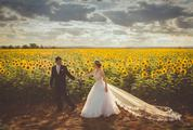 Bride and Groom against Sunflowers Field
