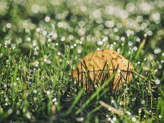 Drops on Green Grass