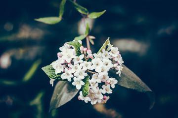 Spring Flowers Branch