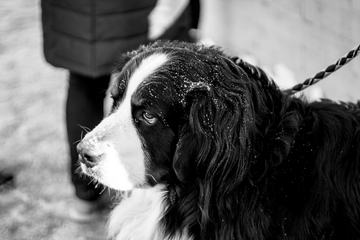 Black and White Portrait of Sad Dog