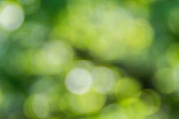 Green Bokeh out of Focus