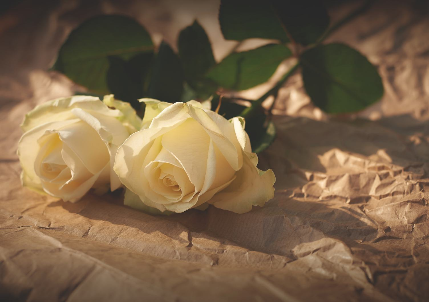 Two Roses on Crumpled Paper