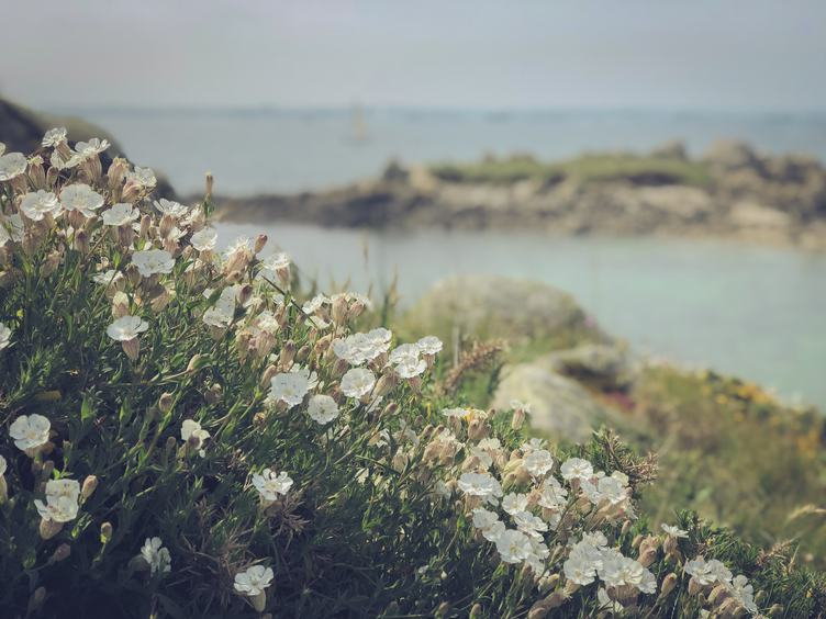 White Flowers on the Cliff