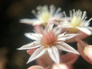 Macro of Delicate Light Pink Flower