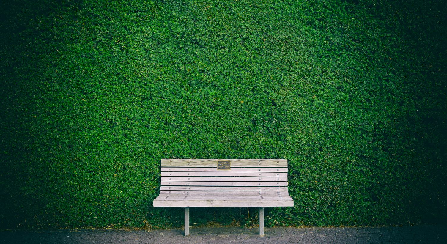 Wooden Bench against Green Hedge Wall