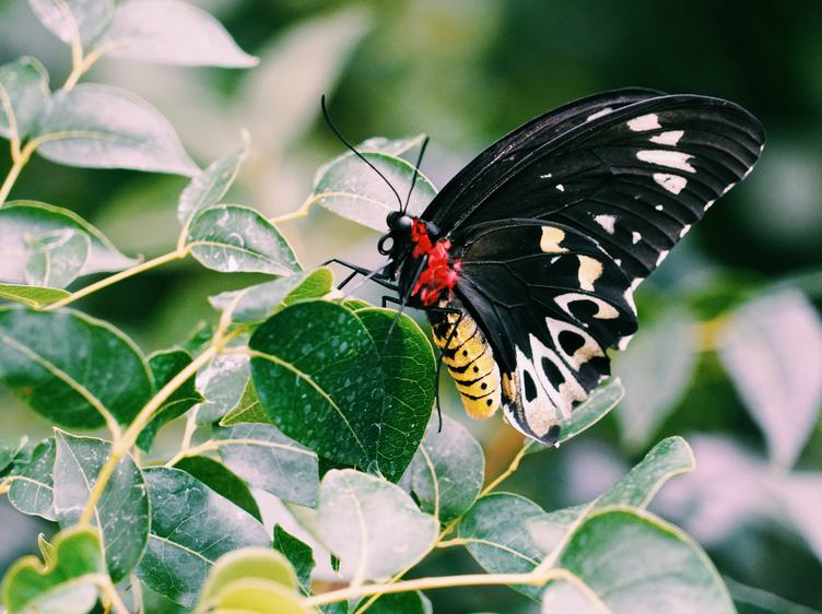 Butterfly on a Green Branch