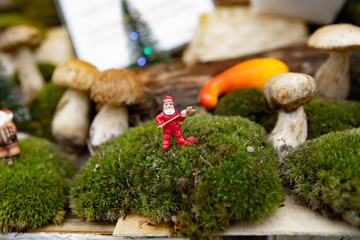 Decoration with Moss and Mushrooms