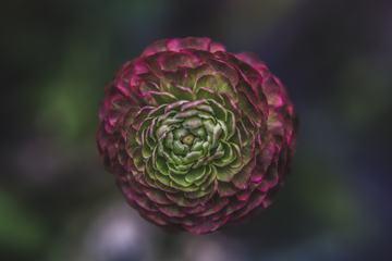 Single Flower on a Blurred Dark Background