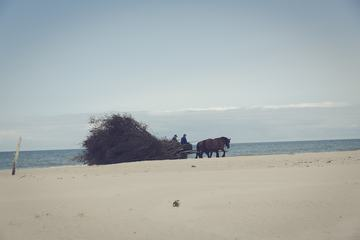 Cart with Horses on the Beach