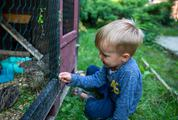 Boy and Quail