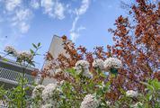 Flowering Spring Bushes