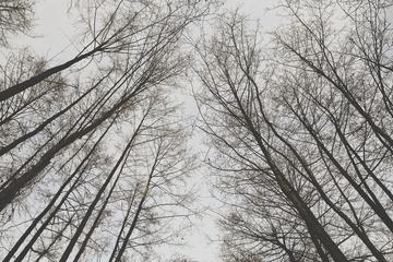 Crowns of Trees in Winter