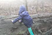 Child and a Fallen Tree
