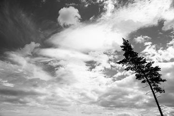 Tree on the Sky Background