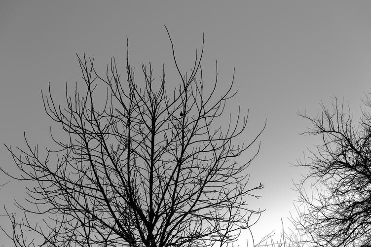 Bird on the Tree in Winter
