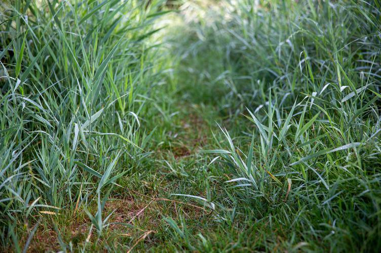 Path Hidden in the Grass